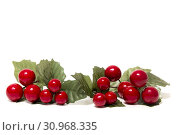 Купить «Different Christmas berry branches isolated on a white background.», фото № 30968335, снято 3 декабря 2017 г. (c) easy Fotostock / Фотобанк Лори