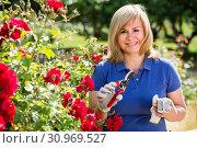 Купить «mature woman taking care of red roses», фото № 30969527, снято 17 июня 2016 г. (c) Яков Филимонов / Фотобанк Лори
