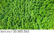 Купить «Aerial photography of deciduous forest», фото № 30985563, снято 15 июня 2019 г. (c) Икан Леонид / Фотобанк Лори