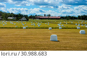 Купить «Landscape with hay bales in plastic wrap on summer field», фото № 30988683, снято 29 марта 2020 г. (c) easy Fotostock / Фотобанк Лори