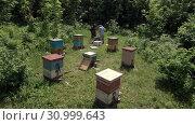 Купить «Горная пасека. Пчеловоды за работой. Вид с воздуха. Mountain apiary. Beekeepers at work. Aerial view», видеоролик № 30999643, снято 19 июня 2019 г. (c) Евгений Романов / Фотобанк Лори