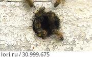 Купить «Горная пасека. Леток в улье. Часть 2. Mountain apiary. Notches in the hive. Part 2.», видеоролик № 30999675, снято 22 июня 2019 г. (c) Евгений Романов / Фотобанк Лори