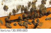 Купить «Горная пасека. Леток в улье. Mountain apiary. Notches in the hive.», видеоролик № 30999683, снято 22 июня 2019 г. (c) Евгений Романов / Фотобанк Лори