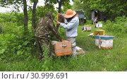 Купить «Горная пасека. Пчеловоды за работой. Mountain apiary. Beekeepers at work.», видеоролик № 30999691, снято 22 июня 2019 г. (c) Евгений Романов / Фотобанк Лори