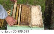 Купить «Горная пасека. Пчеловоды за работой. Mountain apiary. Beekeepers at work.», видеоролик № 30999699, снято 22 июня 2019 г. (c) Евгений Романов / Фотобанк Лори