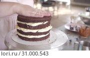Купить «confectioner puts on a chocolate sponge layer of cake on a cream inner layer», видеоролик № 31000543, снято 2 февраля 2019 г. (c) Ирина Мойсеева / Фотобанк Лори