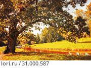 Купить «Autumn landscape of October park nature. Yellowed deciduous autumn tree at the bank of the river in sunny day, colorful autumn scene», фото № 31000587, снято 21 сентября 2017 г. (c) Зезелина Марина / Фотобанк Лори