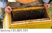 Купить «Горная пасека. Пчеловоды за работой. Mountain apiary. Beekeepers at work.», фото № 31001151, снято 17 февраля 2020 г. (c) Евгений Романов / Фотобанк Лори