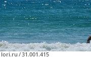 Купить «Azure waves rolled shore of Nai Harn Beach», видеоролик № 31001415, снято 29 апреля 2019 г. (c) Игорь Жоров / Фотобанк Лори
