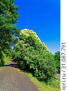 Wege, Bäume, Blüten, weiss. Стоковое фото, фотограф Bernd J. W. Fiedler / age Fotostock / Фотобанк Лори