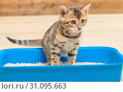 Купить «focused kitty on the toilet tray does important things», фото № 31095663, снято 25 января 2017 г. (c) Константин Лабунский / Фотобанк Лори