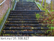 Купить «Stone staircase in the middle of nature, outdoor architecture, steps covered in leaves, slippery stairs», фото № 31108827, снято 1 февраля 2019 г. (c) easy Fotostock / Фотобанк Лори