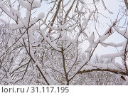 Купить «Winter Forest, Nature, Trees, Spruces and Pines, Branch, Snow Day, Cold», фото № 31117195, снято 4 декабря 2016 г. (c) easy Fotostock / Фотобанк Лори
