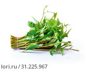 Купить «Water spinach isolated on white background», фото № 31225967, снято 30 августа 2014 г. (c) easy Fotostock / Фотобанк Лори