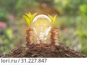 Купить «Energy saving light bulb and tree growing on stacks of coins on nature background. Saving, accounting and financial concept.», фото № 31227847, снято 14 декабря 2017 г. (c) easy Fotostock / Фотобанк Лори