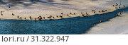 Купить «Panoramic image with flock of ducks on the ice of frozen river», фото № 31322947, снято 19 января 2017 г. (c) easy Fotostock / Фотобанк Лори