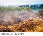 Купить «Manure heap on the field for agriculture», фото № 31326395, снято 10 апреля 2020 г. (c) easy Fotostock / Фотобанк Лори