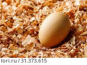 Купить «Hen chicken or duck egg on saw dust, organic food fresh from poultry farm», фото № 31373615, снято 16 мая 2018 г. (c) easy Fotostock / Фотобанк Лори