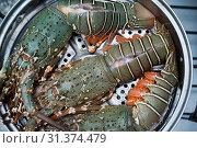 Купить «Raw lobster in the iron steamer», фото № 31374479, снято 6 мая 2018 г. (c) easy Fotostock / Фотобанк Лори