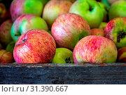 Купить «Fresh red and green apples for sale stored in retro grunge basket in the market», фото № 31390667, снято 13 ноября 2019 г. (c) easy Fotostock / Фотобанк Лори