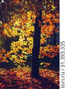 Купить «Maple tree in sunny autumn park», фото № 31393335, снято 12 октября 2013 г. (c) Sergey Borisov / Фотобанк Лори