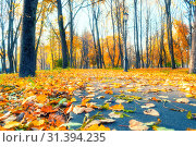 Купить «Autumn landscape - yellowed trees and fallen autumn leaves lying on the road in city park alley in cloudy autumn day», фото № 31394235, снято 18 октября 2018 г. (c) Зезелина Марина / Фотобанк Лори