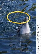 Купить «Dolphin resort, Katsuura Bay, Wakayama Prefecture, Japan, Asia.», фото № 31416227, снято 5 мая 2019 г. (c) age Fotostock / Фотобанк Лори