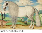 Купить «A Dappled Gray Stallion Tethered in a Landscape, Prague School, late 16th century, probably Prague, Czech Republic (ex-Holy Roman Empire), about 1584 ...», фото № 31466043, снято 7 сентября 2018 г. (c) age Fotostock / Фотобанк Лори