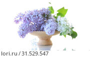 Spring blooming bouquet of lilac isolated on white. Стоковое видео, видеограф Peredniankina / Фотобанк Лори
