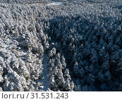 Wintry landscape with pines in the snow in sunny day. Стоковое фото, фотограф Яков Филимонов / Фотобанк Лори