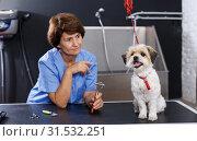 Купить «Havanese getting haircut by female groomer», фото № 31532251, снято 27 августа 2018 г. (c) Яков Филимонов / Фотобанк Лори