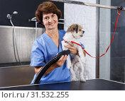 Купить «Woman drying dog with hairdryer», фото № 31532255, снято 27 августа 2018 г. (c) Яков Филимонов / Фотобанк Лори