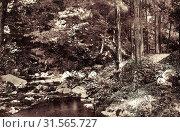 Rivers of Saxony, History of Höckendorf (Klingenberg), 1909, Landkreis Sächsische Schweiz-Osterzgebirge, Höckendorf, Waldpartie, Germany (2019 год). Редакционное фото, фотограф Copyright Liszt Collection / age Fotostock / Фотобанк Лори