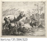 Купить «Goats, 1665. Johann Heinrich Roos (German, 1631-1685). Etching», фото № 31584523, снято 14 февраля 2019 г. (c) age Fotostock / Фотобанк Лори