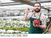 Farmer proud of harvest of strawberries. Стоковое фото, фотограф Яков Филимонов / Фотобанк Лори