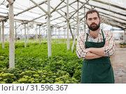 Купить «Confident florist on plantation of hydrangea», фото № 31596367, снято 9 апреля 2019 г. (c) Яков Филимонов / Фотобанк Лори