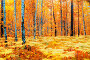 Купить «Осенний пейзаж. Autumn forest landscape in cloudy weather - forest autumn trees and fern on the foreground. Forest nature in autumn day», фото № 31622135, снято 23 августа 2013 г. (c) Зезелина Марина / Фотобанк Лори