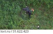Купить «Мужчина косит траву ручной бензиновой газонокосилкой. Вид сверху», видеоролик № 31622423, снято 17 июля 2019 г. (c) А. А. Пирагис / Фотобанк Лори