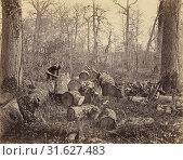 Forêt de Fontainebleau, Constant Alexandre Famin (French, 1827 - 1888), France, about 1875, Albumen silver print (2018 год). Редакционное фото, фотограф © Liszt Collection / age Fotostock / Фотобанк Лори