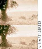 2 shepherds & tree on Mt. of Olives. 1898, Jerusalem, Israel (2018 год). Редакционное фото, фотограф © Liszt Collection / age Fotostock / Фотобанк Лори