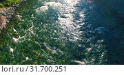 Купить «Low altitude flight over fresh fast mountain river with rocks at sunny summer morning.», видеоролик № 31700251, снято 7 апреля 2019 г. (c) Александр Маркин / Фотобанк Лори