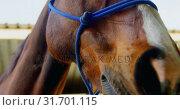 Horse in stable 4k. Стоковое видео, агентство Wavebreak Media / Фотобанк Лори