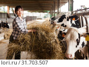 Купить «Female technician feeding cows with grass and smile in livestock barn», фото № 31703507, снято 29 мая 2019 г. (c) Яков Филимонов / Фотобанк Лори