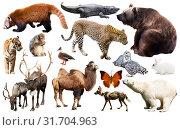 Купить «asia animals isolated», фото № 31704963, снято 18 октября 2019 г. (c) Яков Филимонов / Фотобанк Лори