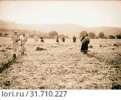 Ruth series, Ruth the Moabitess 1898, Middle East, Israel and/or Palestine (2018 год). Редакционное фото, фотограф © Liszt Collection / age Fotostock / Фотобанк Лори