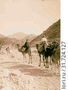 Sinai. 1898, Egypt, Sinai (2018 год). Редакционное фото, фотограф © Liszt Collection / age Fotostock / Фотобанк Лори