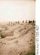 Tell Beit Mirsim. 1926, Israel, Debir (Extinct city) (2018 год). Редакционное фото, фотограф © Liszt Collection / age Fotostock / Фотобанк Лори