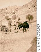 Threshing-board at Yammuneh 1900, Lebanon, Yammune (2018 год). Редакционное фото, фотограф © Liszt Collection / age Fotostock / Фотобанк Лори