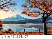 Morning Sunrise Mt. Fuji in autumn at Kawaguchiko or lake Kawaguchi in Fujikawaguchiko Japan. Стоковое фото, фотограф Zoonar.com/Vichaya Kiatying-Angsulee / easy Fotostock / Фотобанк Лори