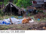 Индия, Гоа. Рыбацкая лачуга и разруха возле деревни Чапора (2017 год). Редакционное фото, фотограф Павел Сапожников / Фотобанк Лори